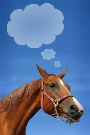 Young beautiful horse with speech bubble against blue sky photo
