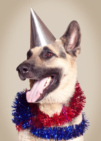 Funny Alsatian dog ready to celebrate a holiday  photo