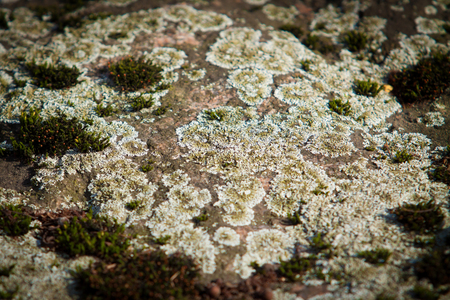 Old rough stone with fungus mold moss  photo