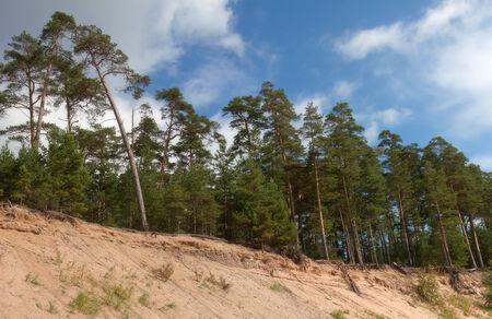 ladoga: Pinewood on the island Konevets, Ladoga lake, Russia