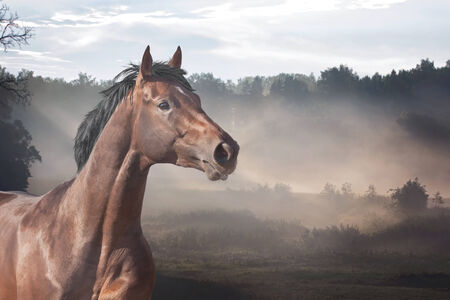 Horse on summer meadow at sunrise time photo