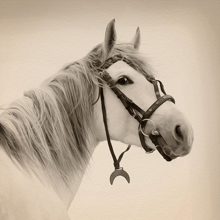 Beautiful Tersk stallion, Image with oil painting effect