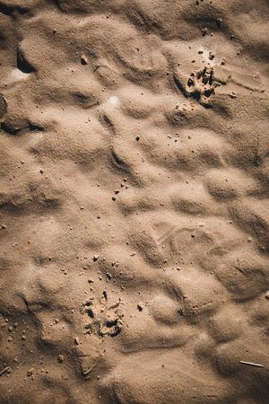 Dog paw prints on the sand.  photo