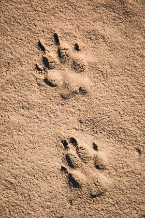 Dog paw prints on the sand.