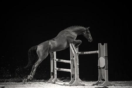 caballo negro: Foto blanco y negro del caballo de salto