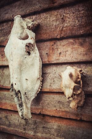 deer skull: Horse and deer skull on the wall of a wooden house