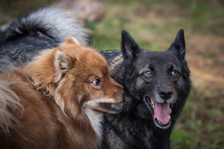 perros jugando: Dos perros divertidos jugando al aire libre