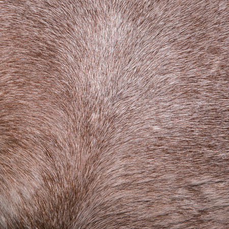 lear: Close up horse skin concept for background