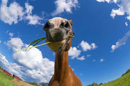 fish eye: Russian Don horse in the summer meadow. Made by fish eye lens.