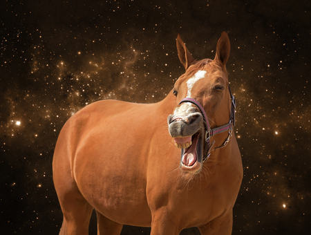 A funny photo of a yawning horse