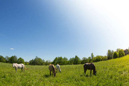 fish eye: Herd of horses. Made by fish eye lens.