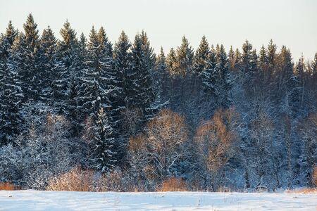 snowy field: Snowy field and trees, winter landscape