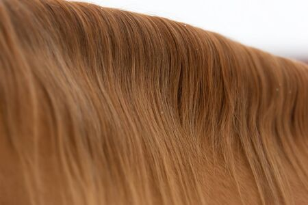 Closeup shot of red horse mane Stock Photo