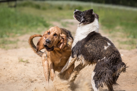Funny dogs playing outdoors at summer day