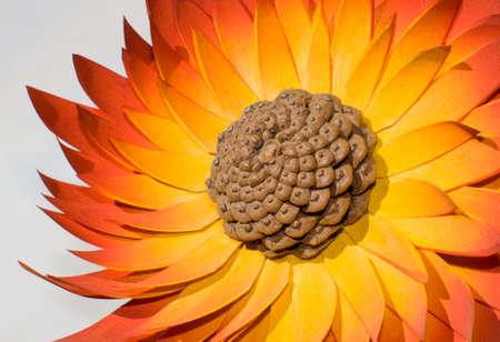 Orange wood flower on white background photo
