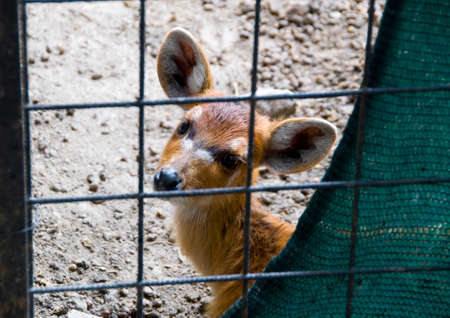 fawn behind the cage photo