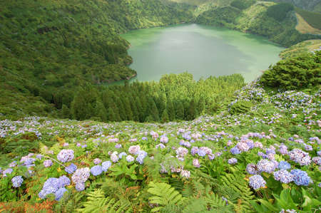 agriculture azores: Flowers on the volcano in azores, Fayal, portugal