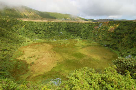 agriculture azores: Plants on the volcano in azores, Fayal, portugal Stock Photo
