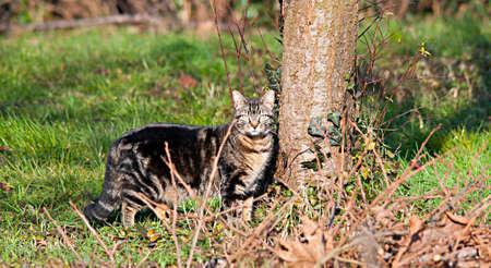 wild cat on the field photo