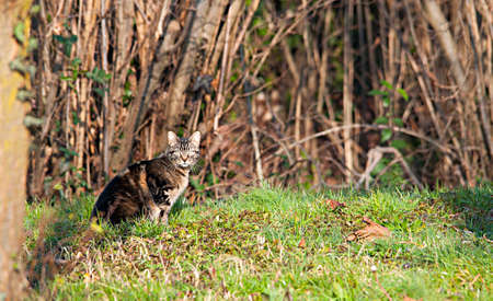 wild cat: wild cat on the field Stock Photo