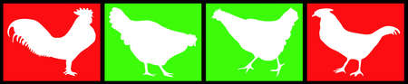 cock duck: composition of white hens on a green and red background