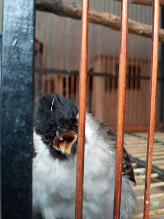 A finch greeted from inside the cage.