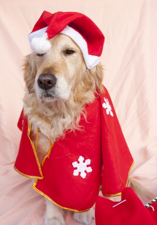 Dog dressed as Santa Claus with Christmas gifts photo
