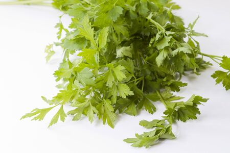 curly leafed: Branches of fresh parsley for cooking and food garnish