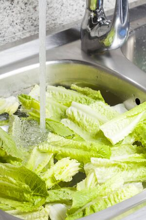 disinfecting: Washed and sanitized pieces of lettuce