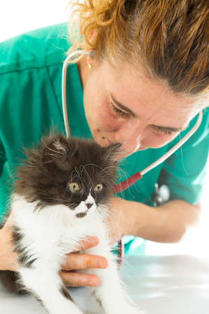 catlike: Veterinary conducting a review to a kitten