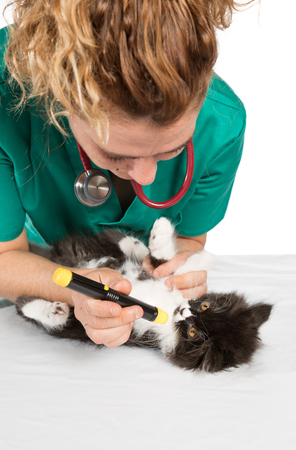 Veterinary conducting a review to a kitten photo