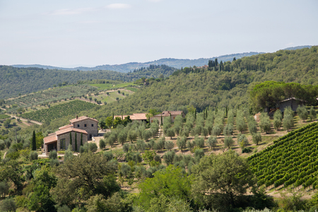 Famous Tuscany vineyards near the Florence in Italy photo