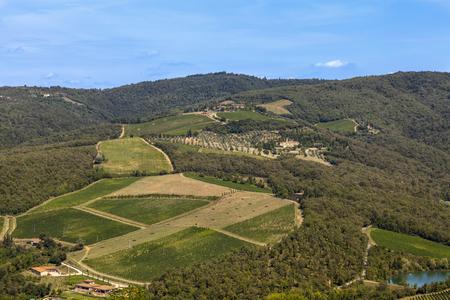Famous Tuscany vineyards on Radda chianti photo
