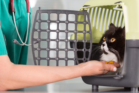 food inspection: Veterinary clinic taking a Persian cat of your transporter