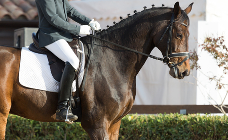 equitation: Closeups of a competition of dressage horses in Spain