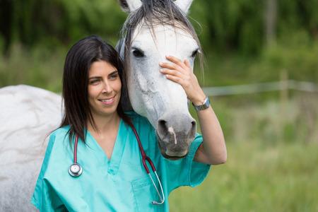 veterinaria: Gran Veterinaria realizar una exploración a un joven yegua Foto de archivo