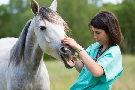 horses in field: Veterinary great performing a scan to a young mare