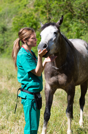 mare: Veterinary great performing a scan to a young mare