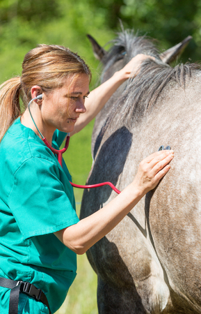 veterinarian: Veterinary great performing a scan to a young mare