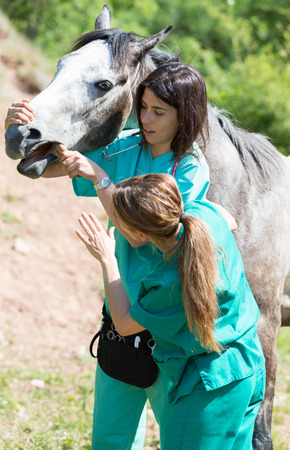 buccal: Veterinary great performing a scan to a young mare