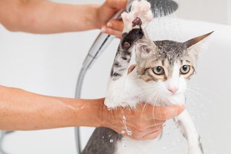bath: Bubble bath a small gray stray cat