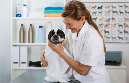 Hunde Friseur in einem Schönheitsklinik mit Französisch Bulldogge Lizenzfreie Bilder