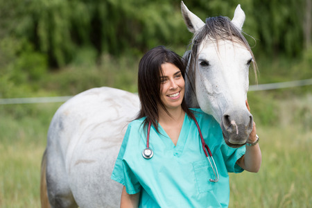 veterinary care: Veterinary great performing a scan to a young mare