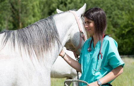 yegua: Gran Veterinaria realizar una exploraci�n a un joven yegua Foto de archivo