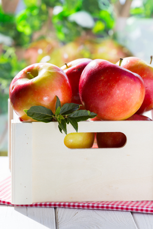 winesap apple: Fresh red apples in its box and green field background