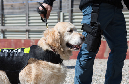 custodian: Dog and police officer with his gun and badge Stock Photo