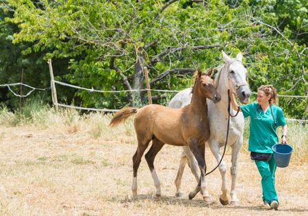 sickly: Veterinary I think feeding a horse on the farm Stock Photo