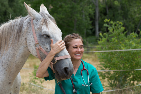 sickly: Veterinary great performing a scan to a young mare