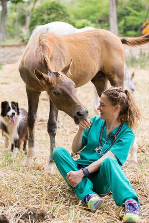 yegua: Gran Veterinaria realizar una exploración a un joven yegua Foto de archivo