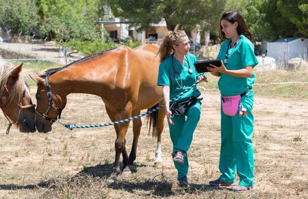 Veterinary horses on the farm making an inquiry with the tablet Stock fotó